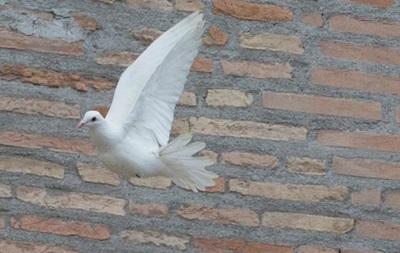В Запорожье в небо выпустят голубей мира