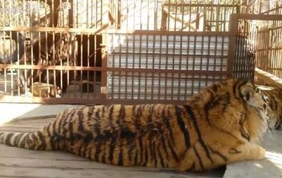 Имения Клименко: тигры и медведи
