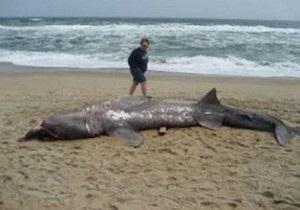 История о пьяном сербе, убившем в Шарм-эль-Шейхе акулу, оказалась шуткой