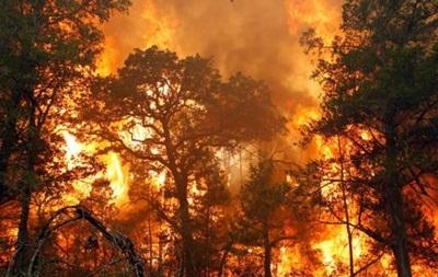 Лесные пожары могут распространить чернобыльскую радиацию – ученые