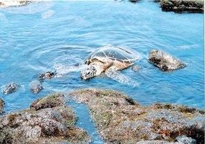 Новости науки - вымирающие виды: черепахи стали есть вдвое больше пластика