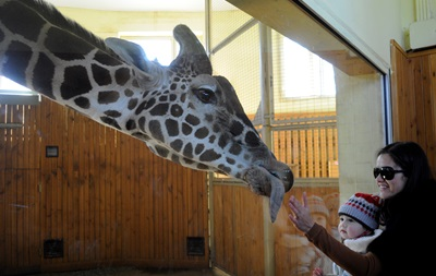 В киевском зоопарке пройдет зооквест