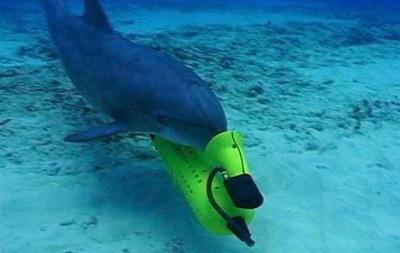 Крымских боевых дельфинов поставят на службу флота России – СМИ