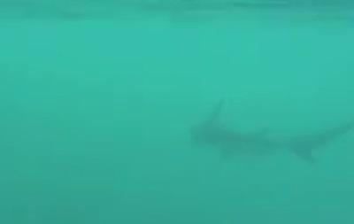 Американец два часа катался на акуле