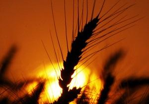 Украина соберет 34 млн тонн ранних зерновых - Минагрополитики
