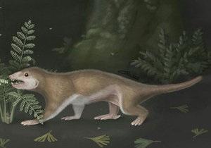 Новости науки: В Китае обнаружили возможных предков млекопитающих