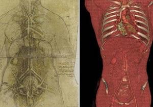 Насколько точны анатомические рисунки Леонардо да Винчи?