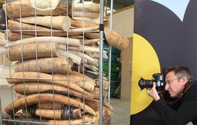 В Бельгии уничтожили полторы тонны контрабандной слоновой кости