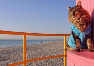 Американский суд обязал кота явиться на судебное заседание