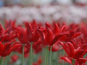 В Киеве начали готовиться к ежегодной выставке цветов