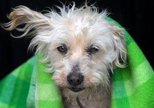 В Киеве появятся приюты для содержания бездомных животных после стерилизации