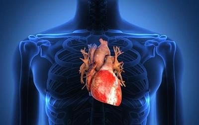 На 3D-принтере напечатают человеческое сердце