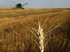 В Луганской области пожар уничтожил 25 га пшеницы