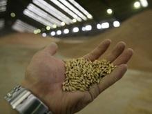 Правительство отменило квоты на экспорт зерна