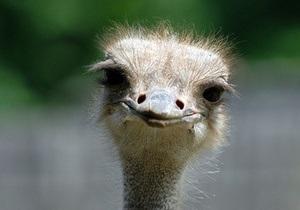 В этом году в Киевском зоопарке появилось 623 новых животных