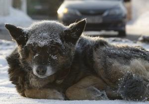 В пятницу в Украине выпадет снег - Гидрометцентр
