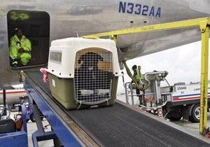 Новости США - странные новости: Американская авиакомпания случайно отправила собаку вместо Аризоны в Ирландию