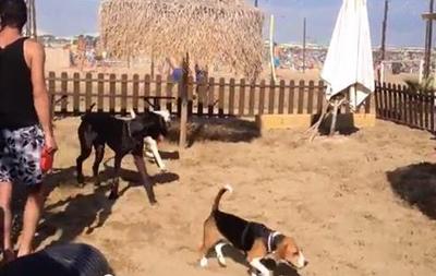 В Италии появился собачий пляж