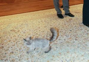 От Медведева сбежал кот