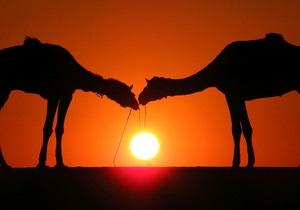 Новости науки - коронавирус - SARS: Переносчиками смертельного коронавируса могут быть верблюды - ученые