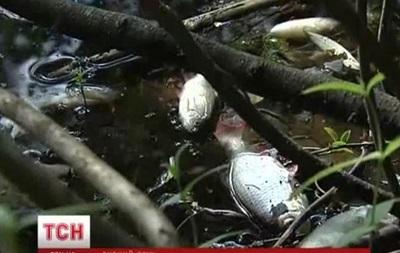 В Киеве приток Днепра покрыт мертвой рыбой