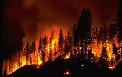 Ученые нашли следы лесного пожара, произошедшего 66 млн лет назад