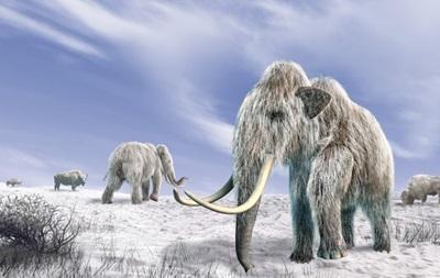 Мамонтов съели древние люди - ученые