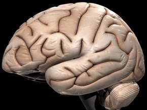 Британцы нашли зону ненависти в мозге