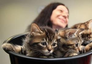 В поезде, следовавшем из Казахстана в Россию, обнаружили мешок контрабандных кошек