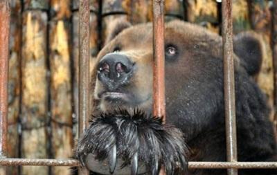 В Полтавской области медведь откусил руку подростку