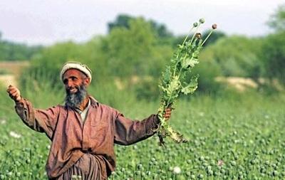 В мире резко возросло производство опиума
