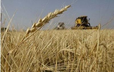 Сжатие жатвы. Зерновых в этом году соберут на 12% меньше