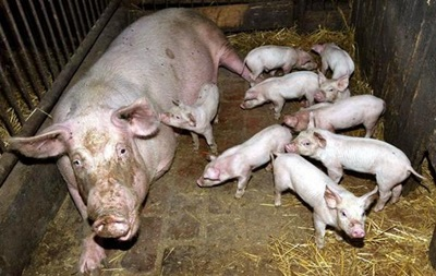 Россия резко ограничила импорт мяса из Молдовы