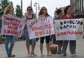 акція \ СТОП ЗООЗИДУ у Києві\