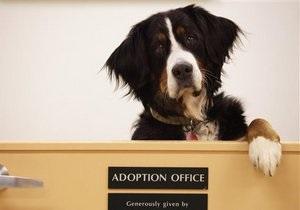 В Техасе на пост губернатора выдвинули собаку