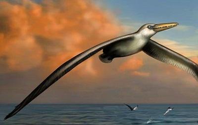 Найдены кости  самой большой  летающей птицы на Земле