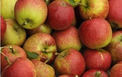 Яблоки снижают риск инфаркта - ученые