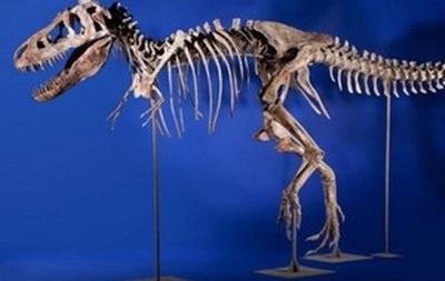 США вернули Монголии похищенные останки 18 динозавров