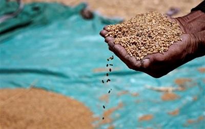 В Украине производство зерна сократилось вдвое