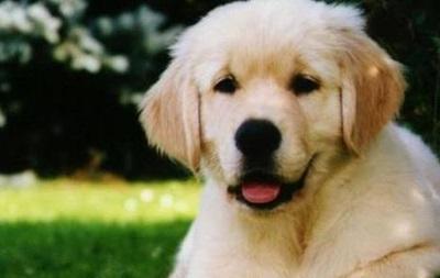 Собаки испытывают чувство ревности подобно людям