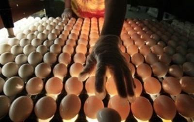 В Шахтерске из-за военных действий остановила работу крупная птицефабрика