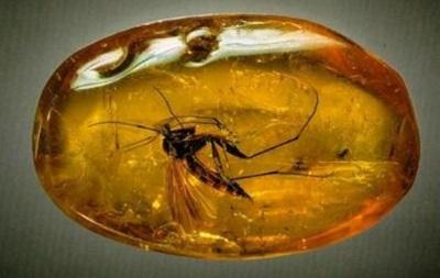В китайском янтаре нашли насекомых из Прибалтики