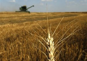 Минсельхоз США прочит Украине рост экспорта пшеницы