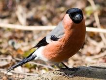 Эксперты: На планете гибнут птицы