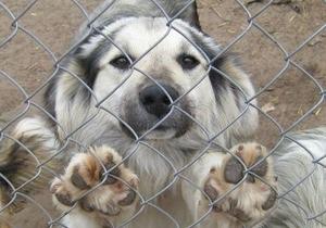 К Черновецкому приведут греться две тысячи бездомных собак