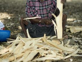WWF: производство биотоплива наносит ущерб экологии