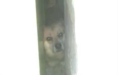 Николаевские спасатели спасли застрявшую собаку