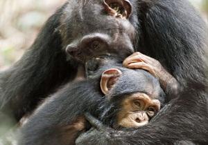 Исследователи спорят о наличии у животных эмоций