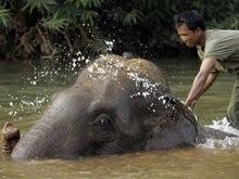 В Лаосе пройдет конкурс красоты среди слонов
