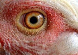 В Киевской области на птицефабрике погибли 100 тыс. голов птиц